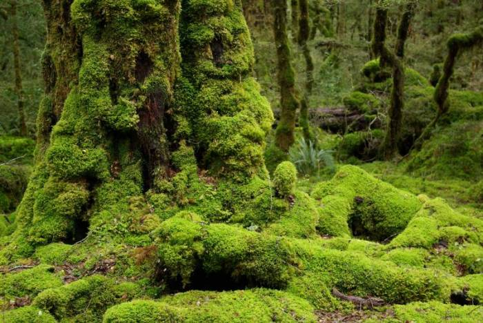 Image result for mossy forest brinchang