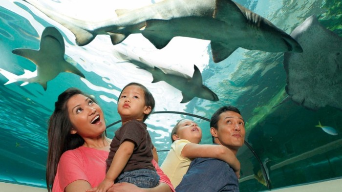 SEA LIFE Malaysia - Aquarium features a 180-degree see through tunnel to give guests a more immersiv-960x540